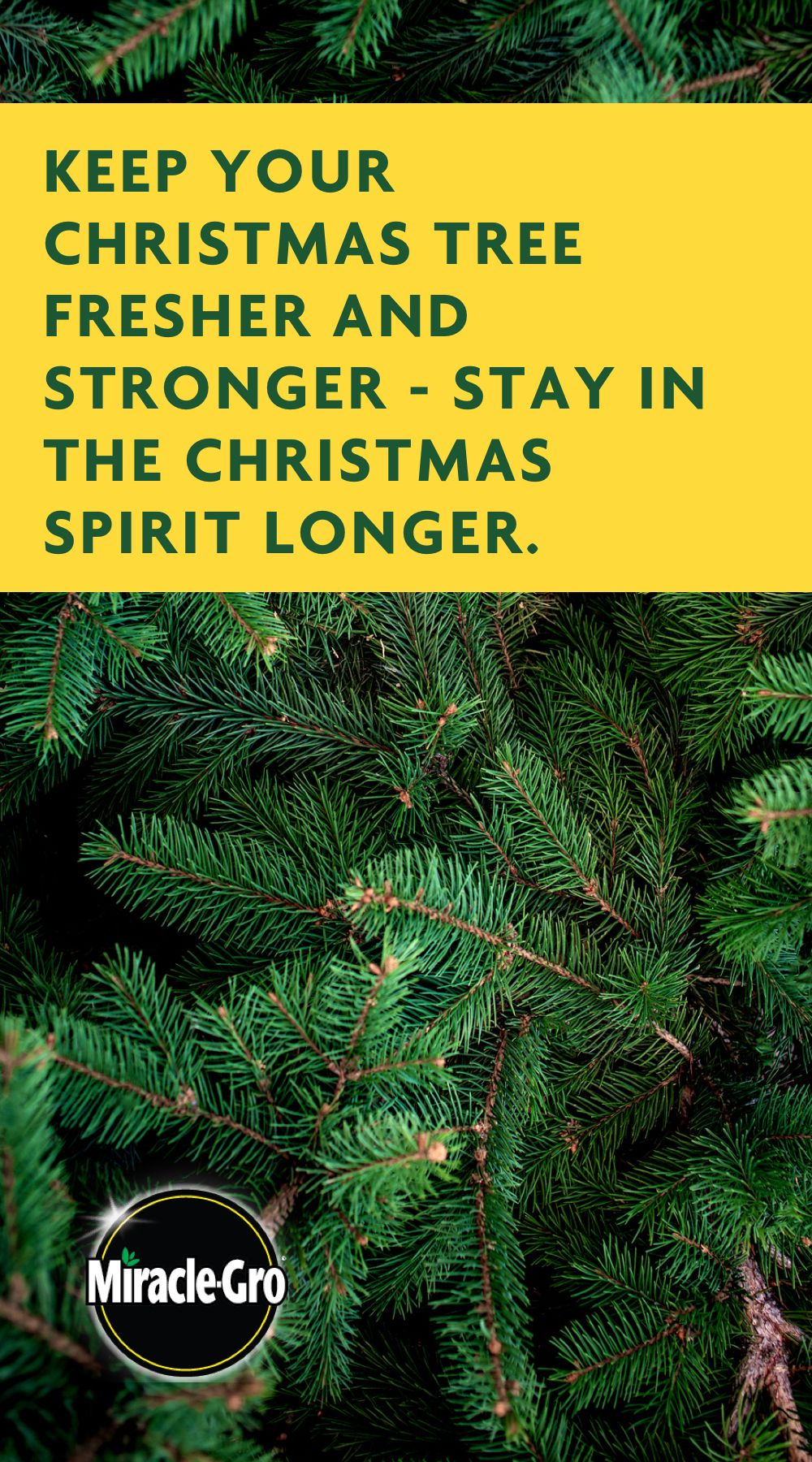 Don't let your Christmas fall like needles to the ground as soon as the holiday ends. Extend the ...