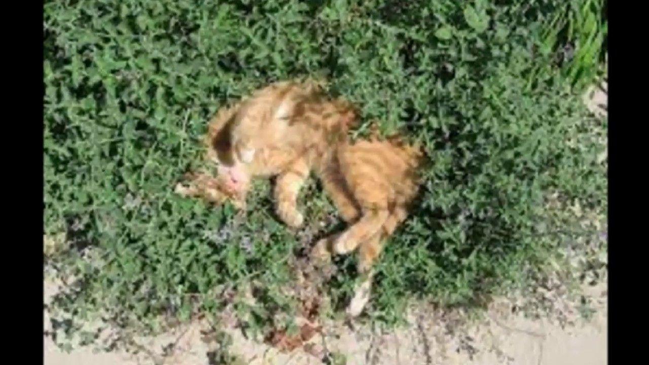 How to Make Homemade Cat Repellent ?? Catnip, Catnip