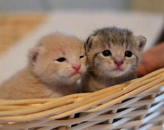 Two Adorable Newborn Kittens | Newborn kittens, Cat and Baby kittens