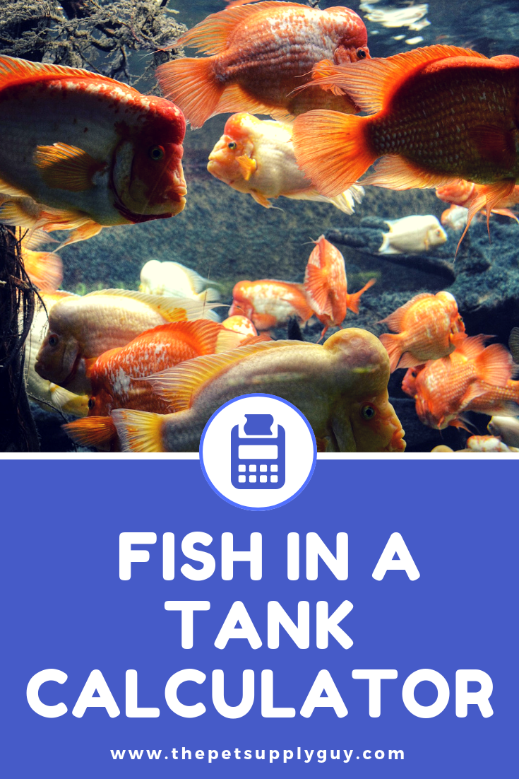 How Many Fish In A Tank Calculator Tropical Fish Aquarium Fish
