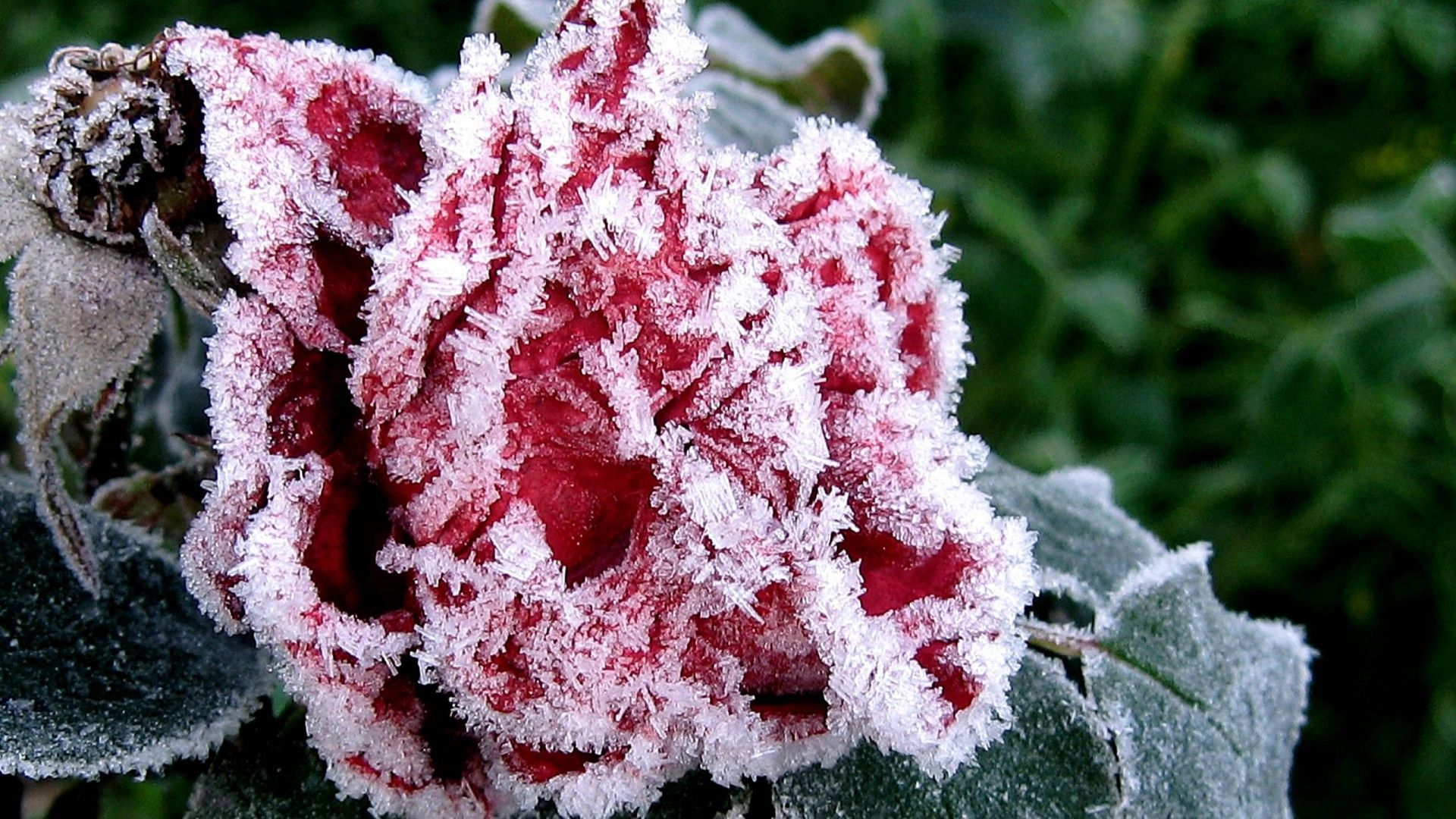 pix for > abstract ice flower wallpaper | street wear concept term 2