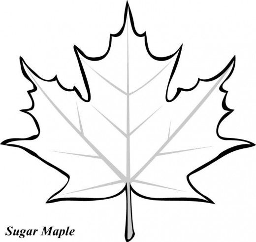Maple Leaf Printable Coloring Pages kanadian leave Pinterest