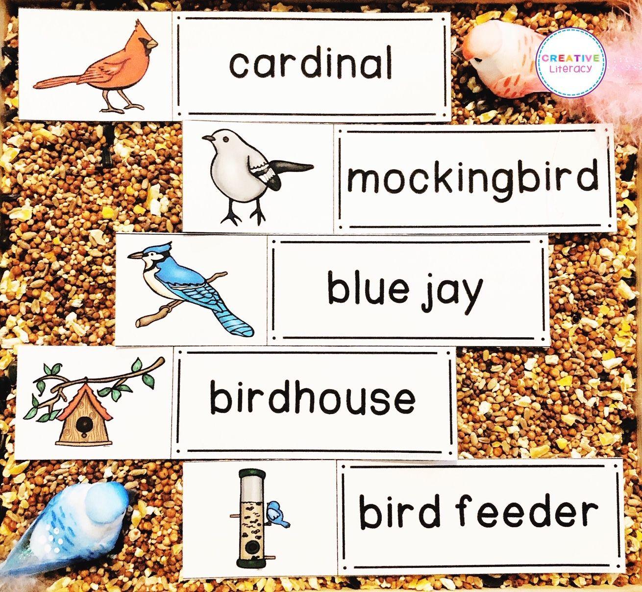 Pin On Bird Activities [ 1208 x 1310 Pixel ]