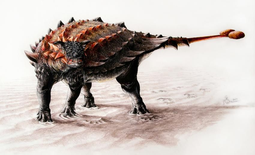 Ziapelta sanjuanensis, a new species of ankylosaurid dinosaur from New Mexico (Art by Sydney Mohr).