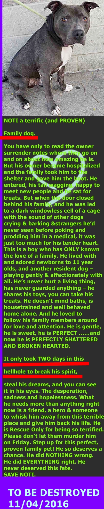 SOOO WRONG MURDERED 11-4-2016 --- Manhattan Center  My name is NOTI. My Animal ID # is A1095459. I am a male gray and white am pit bull ter. The shelter thinks I am about 7 YEARS old.  I came in the shelter as a OWNER SUR on 11/01/2016 from OUT OF NYC, owner surrender reason stated was OWNER HOSP. http://nycdogs.urgentpodr.org/noti-a1095459/