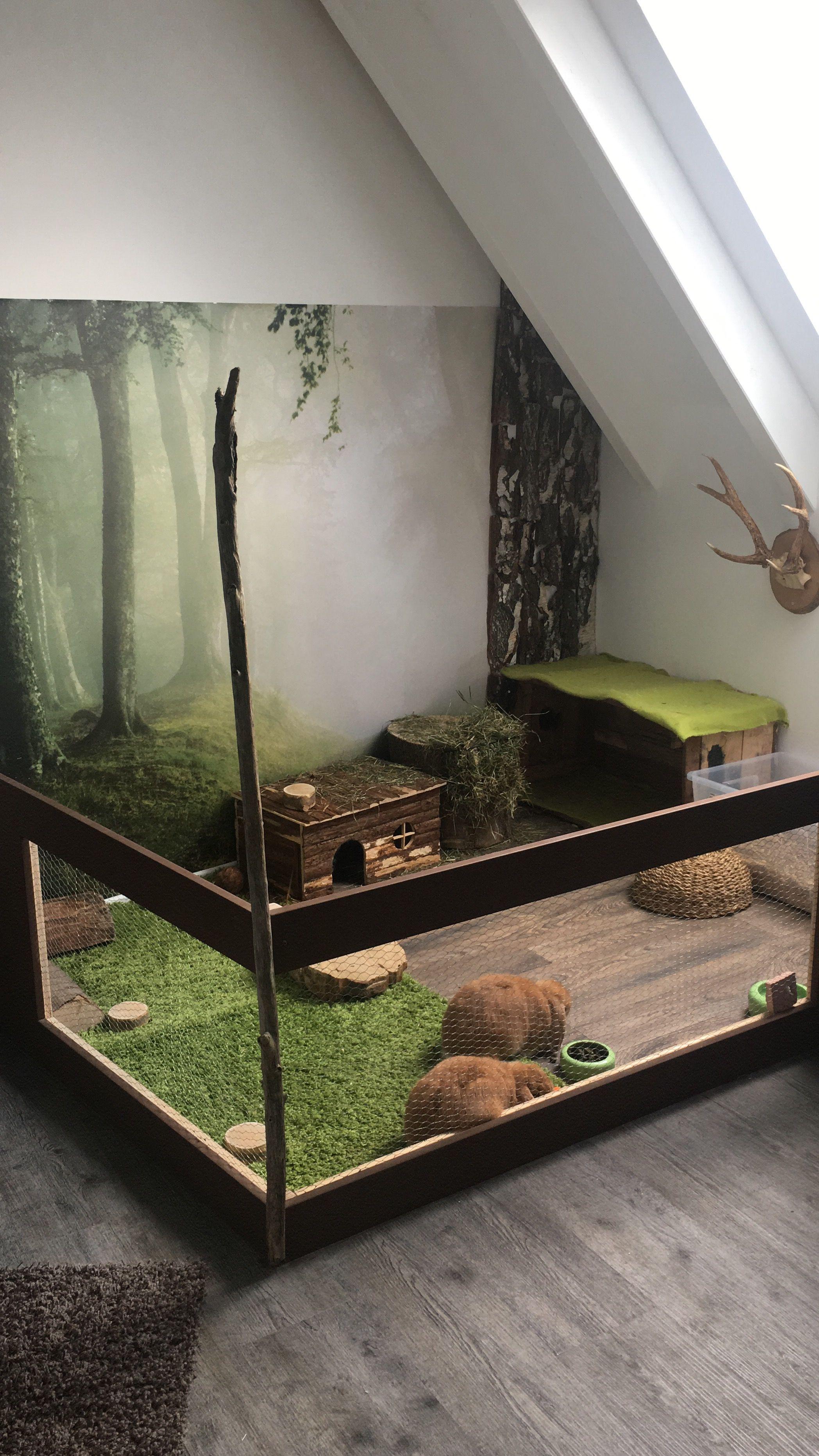 Rabbit cage indoor indesign pinterest rabbit cages for Design indoor rabbit cages
