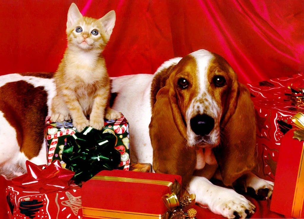 Funny Christmas Cat Wallpaper Christmas Cats Wallpapers