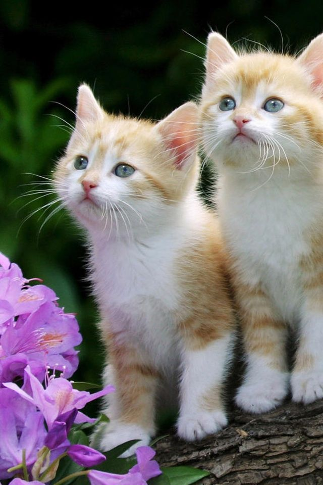 Such cute kittens