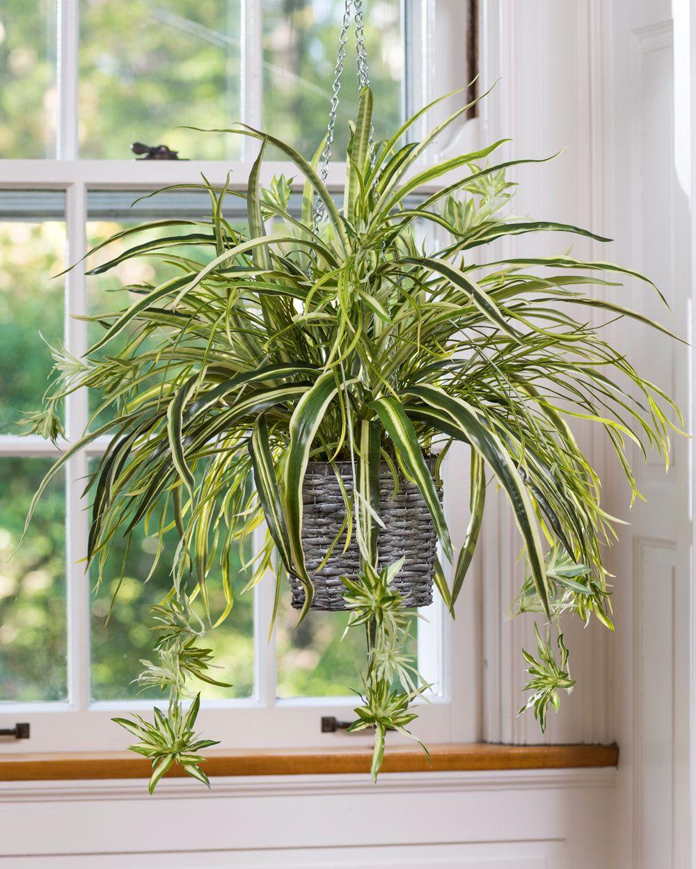 15 Best Low Light Indoor Plants Hanging plants, Best