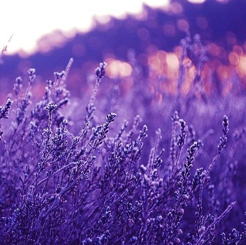 Purple.... | The World Around Us | Pinterest | Purple