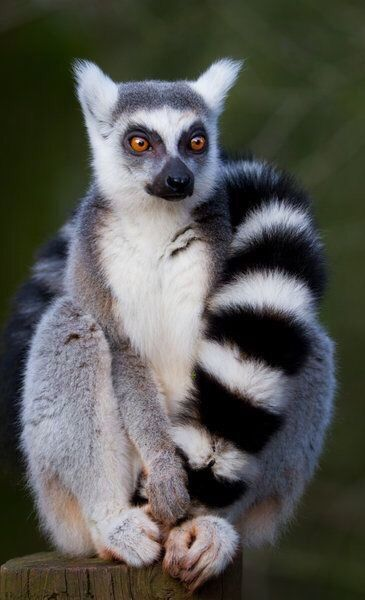 These Top 10 Animal Facts Will Both Amaze You And Make You Laugh Cute Animals Lemur Animals