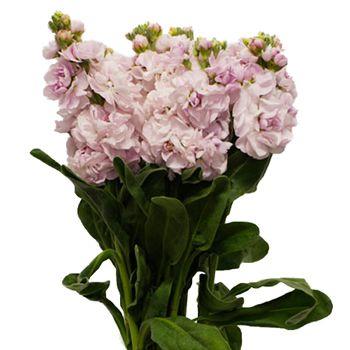 Stock light pink flower laurens wedding pinterest stock stock light pink flower mightylinksfo Gallery
