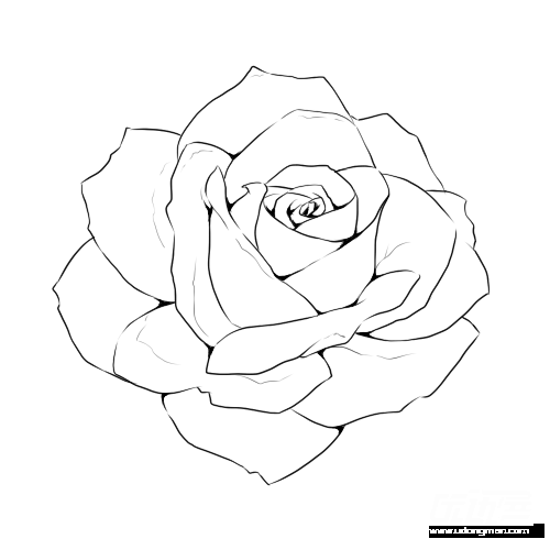 Rose Line Drawing : All line art rose objects isolated on white background.