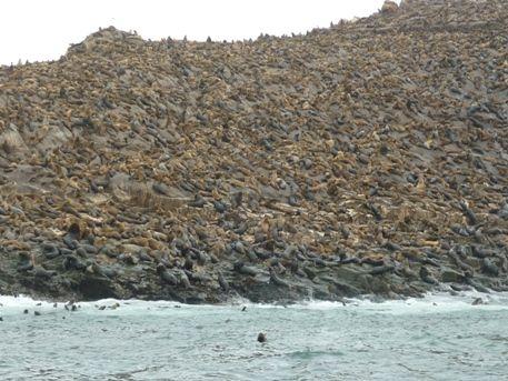 Islas palomino - Población de Lobos Marinos