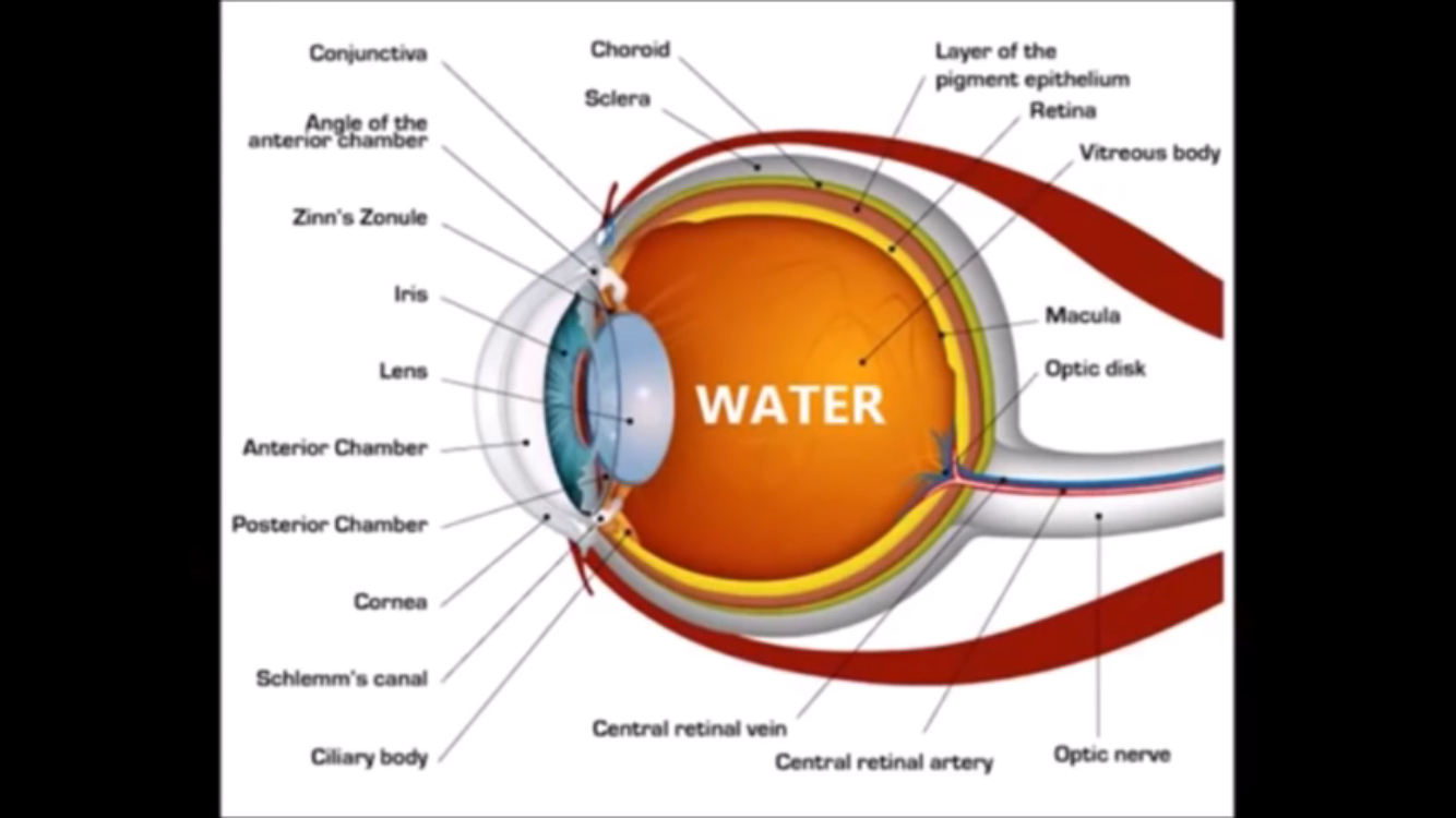 Pin By Brenda Montana Knellwolf On Optometry Tips Pinterest Human Eye Diagram Anatomy Of The Eyeball