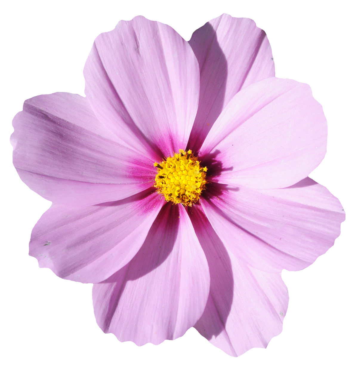 Blossom Flower Png Image Flower Png Images Flower Images Abstract Flowers