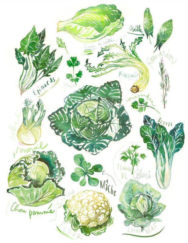 La Cuisine De Virginie | Illustration Lucile Prache Greens Jpg Lucile Prache Virginie