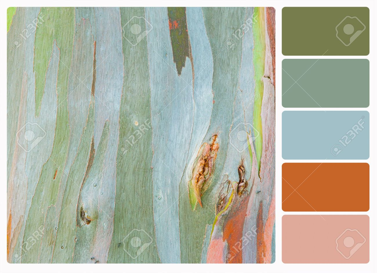 Image result for eucalyptus bark | Color Inspiration | Pinterest ...