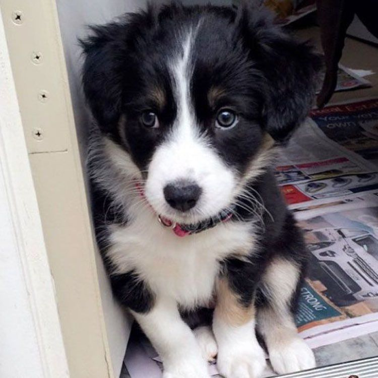 Puppy Eyes Cute Cats And Dogs Corgi Mix Puppies Cute Animals