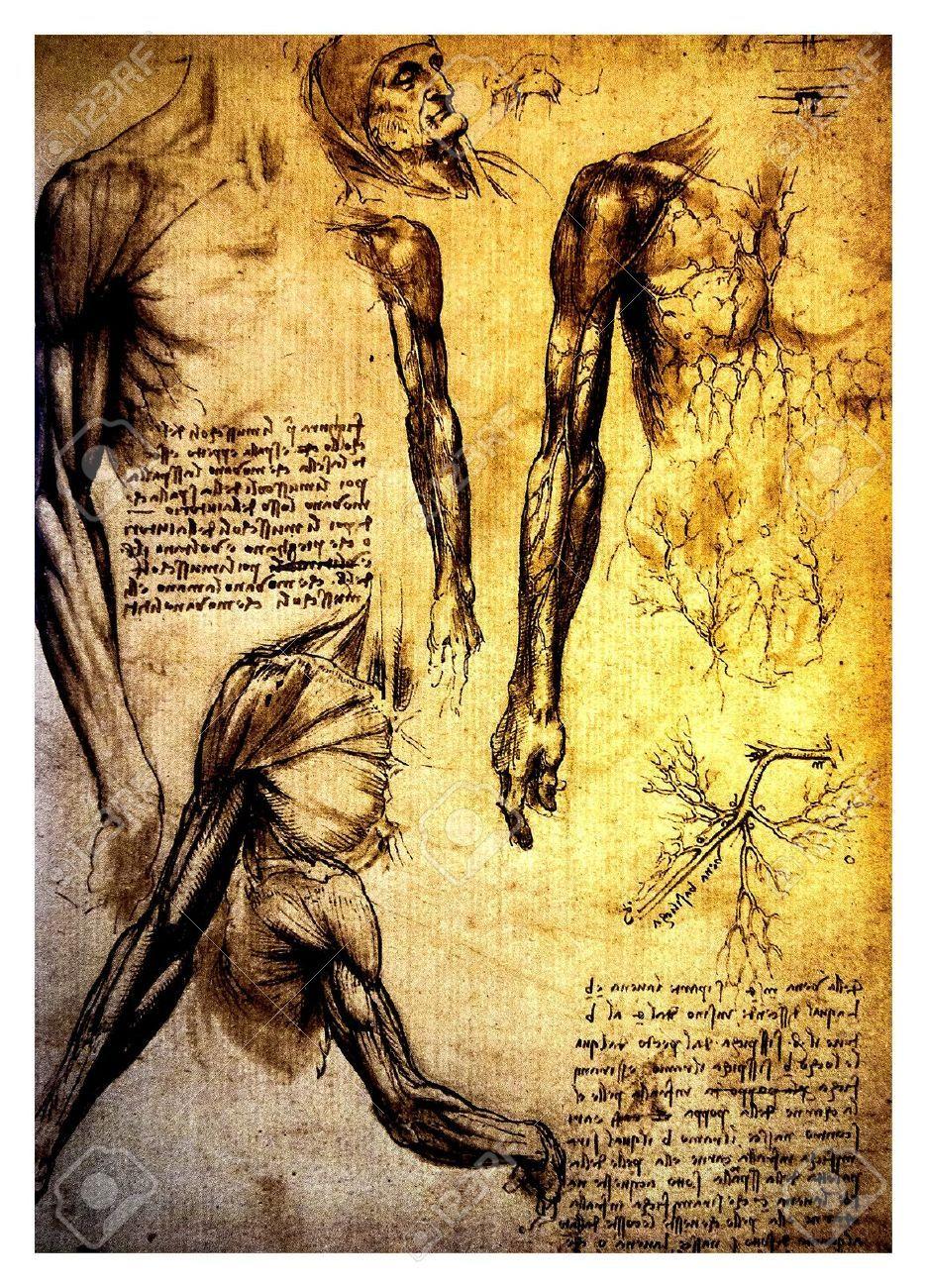 Leonardo Da Vinci - Anatomia del cuerpo humano (936×1300) | Leonardo ...