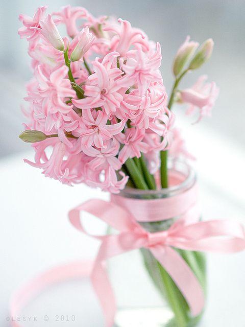 Pink Hyacinths.