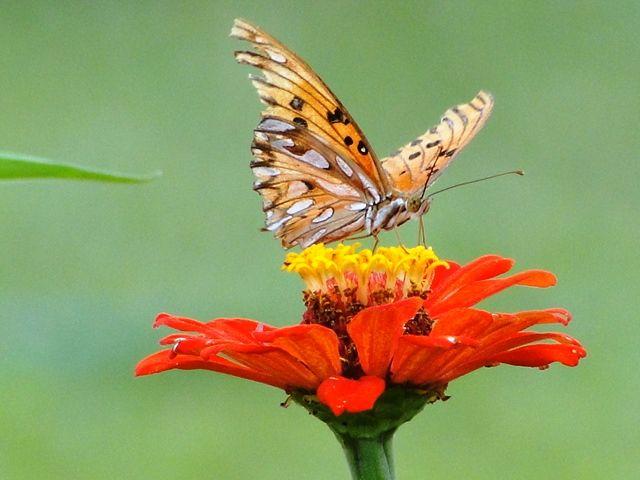 Planta cá de casa: Só borboletas