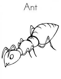 Image Result For Insect Colouring Pages