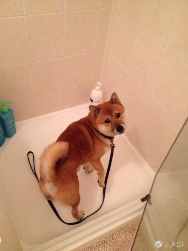 你騙我!主人告訴狗狗要去散步 卻突然被帶進浴缸時的表情 - JUKSY 線上流行生活雜誌