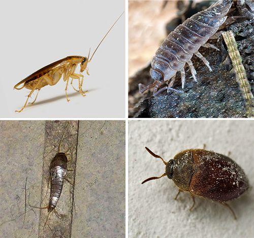 эту насекомые в квартире в картинках с названием помощью сможете