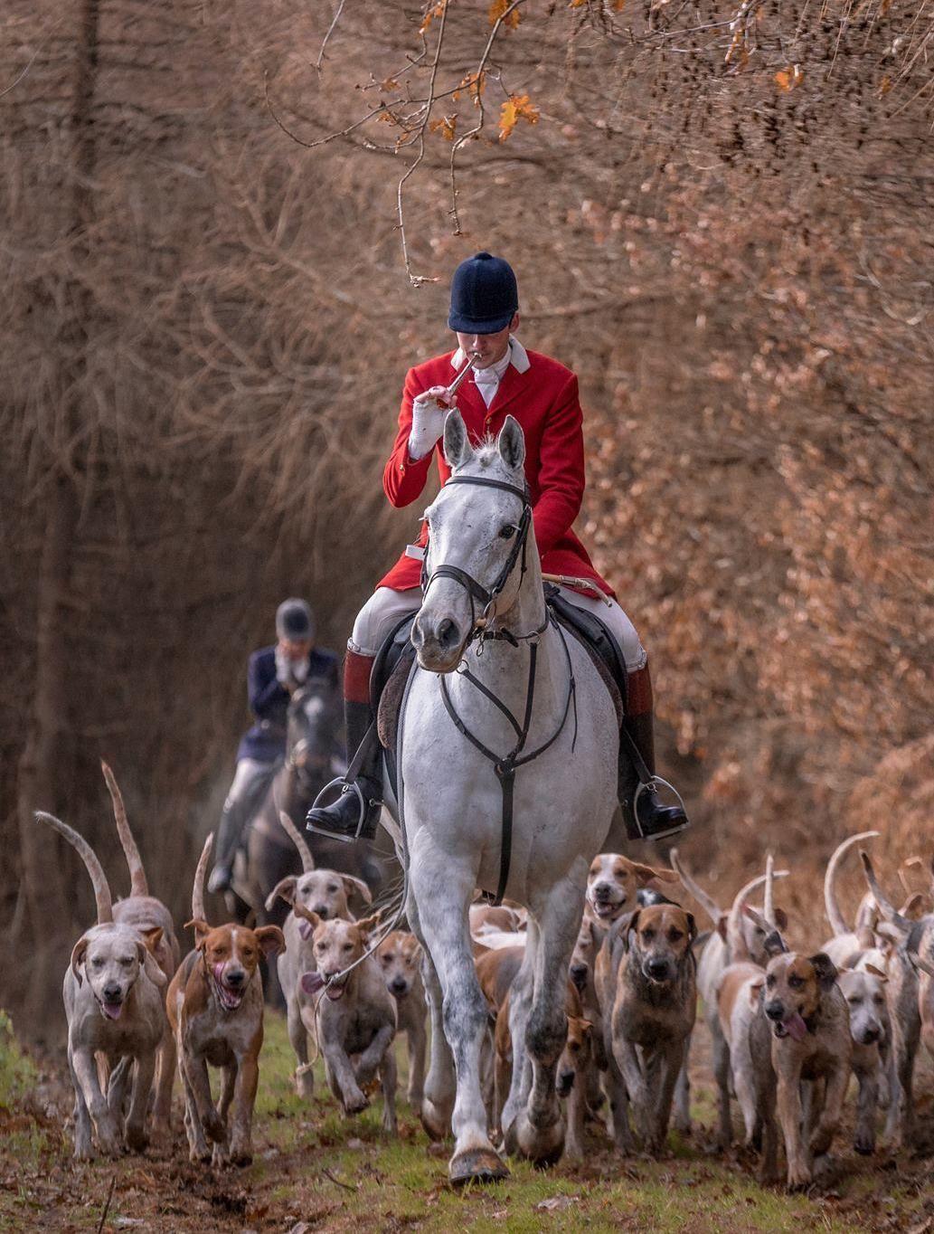 Gentleman Bobwhite Hunting dogs, Fox hunting, Gentleman