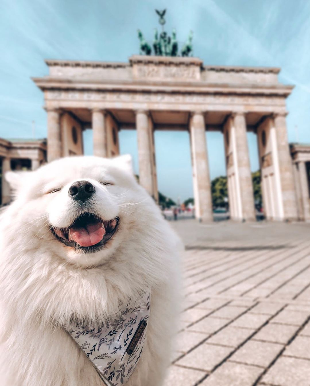Pin By Bonnie Louise Choi On Instagram Aesthetic In 2020 Samoyed Dogs