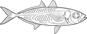 Billedresultat for tegninger af fisk
