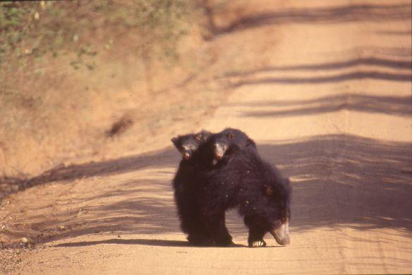 Mei is de allerbeste maand voor een safari in het Yala National Park. De kans dat je de beroemde 'Sloth Bear' tegenkomt in deze maand is erg groot!