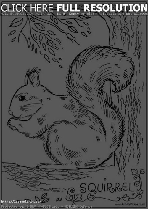 Realistic Squirrel coloring pages for adults - Letscolorit.com http ...