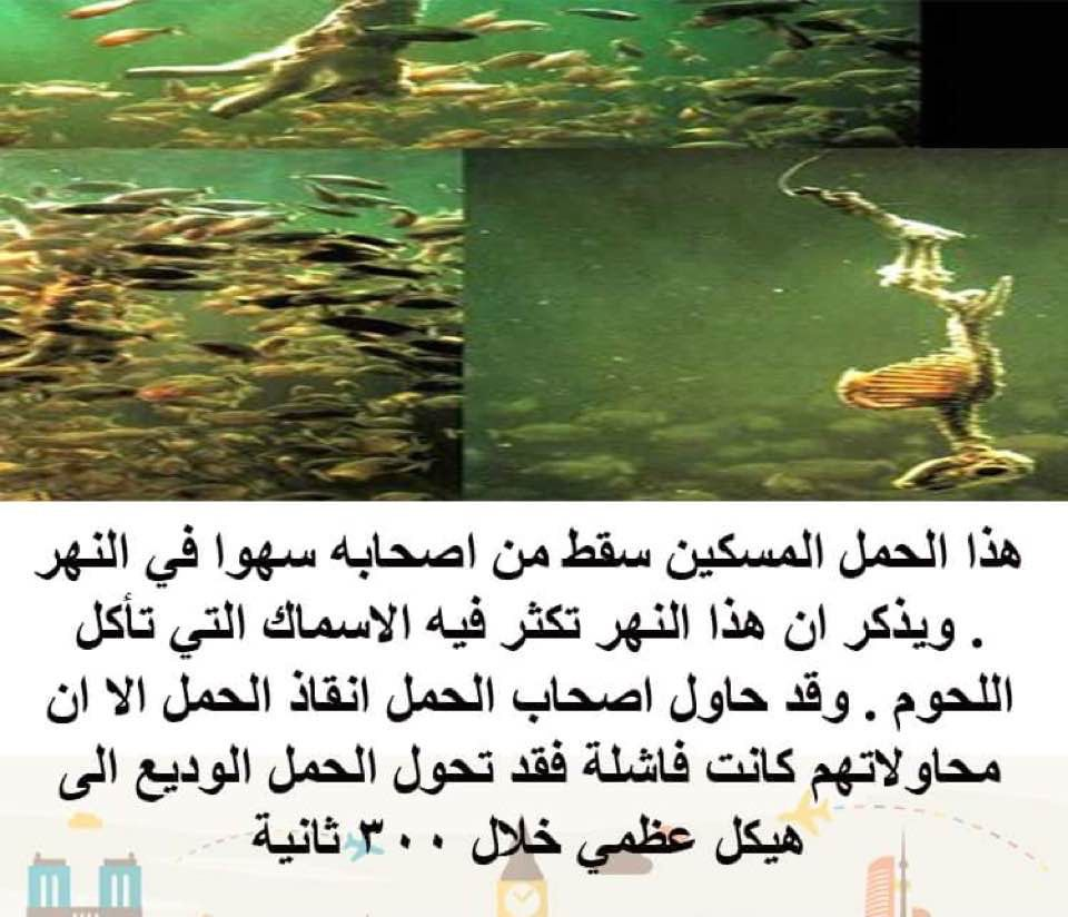 هل تعلم معلومات معلومة بحر نهر اسماك Movie Posters Movies Poster