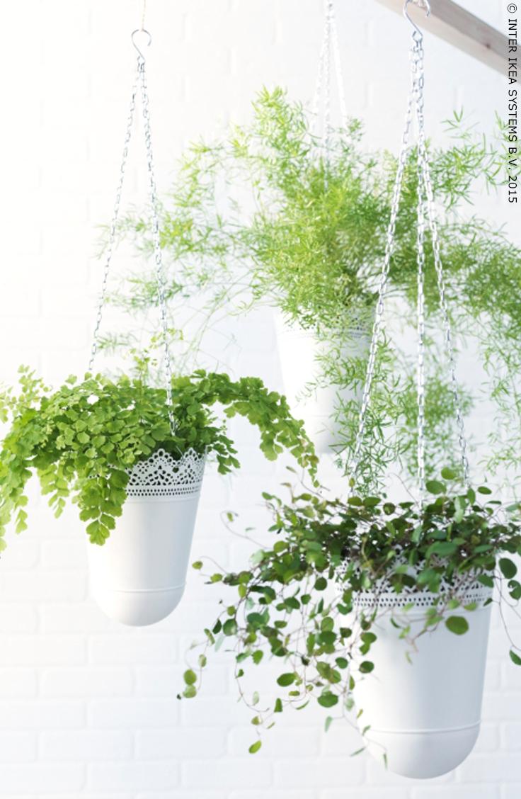 Jardinière À Suspendre Ikea skurar jardinière suspendue - intérieur/extérieur blanc
