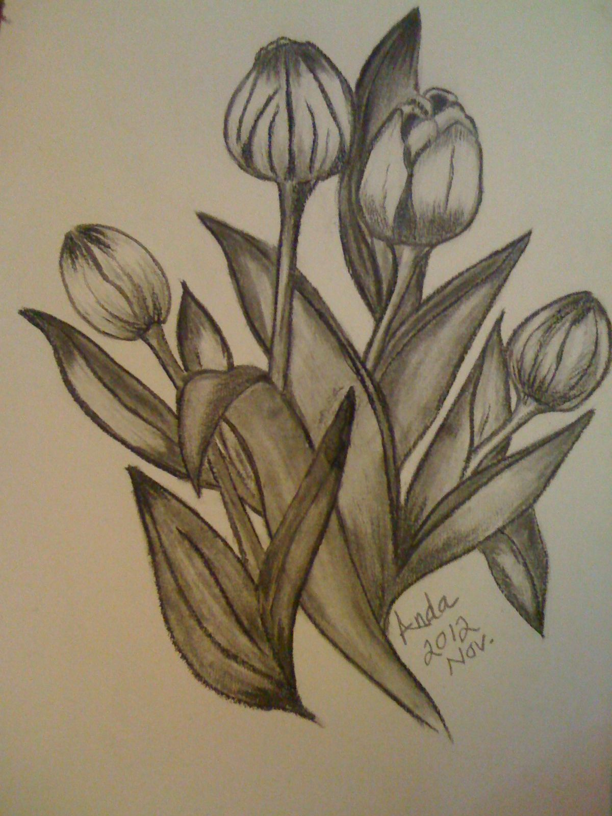 Tulip Flowers i used (Charcoal & Pencil) A3 size My