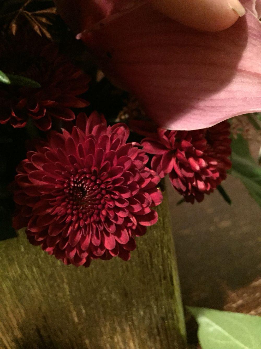 Spray Button Mums In Burgundy Fall Flowers Burgundy Flowers