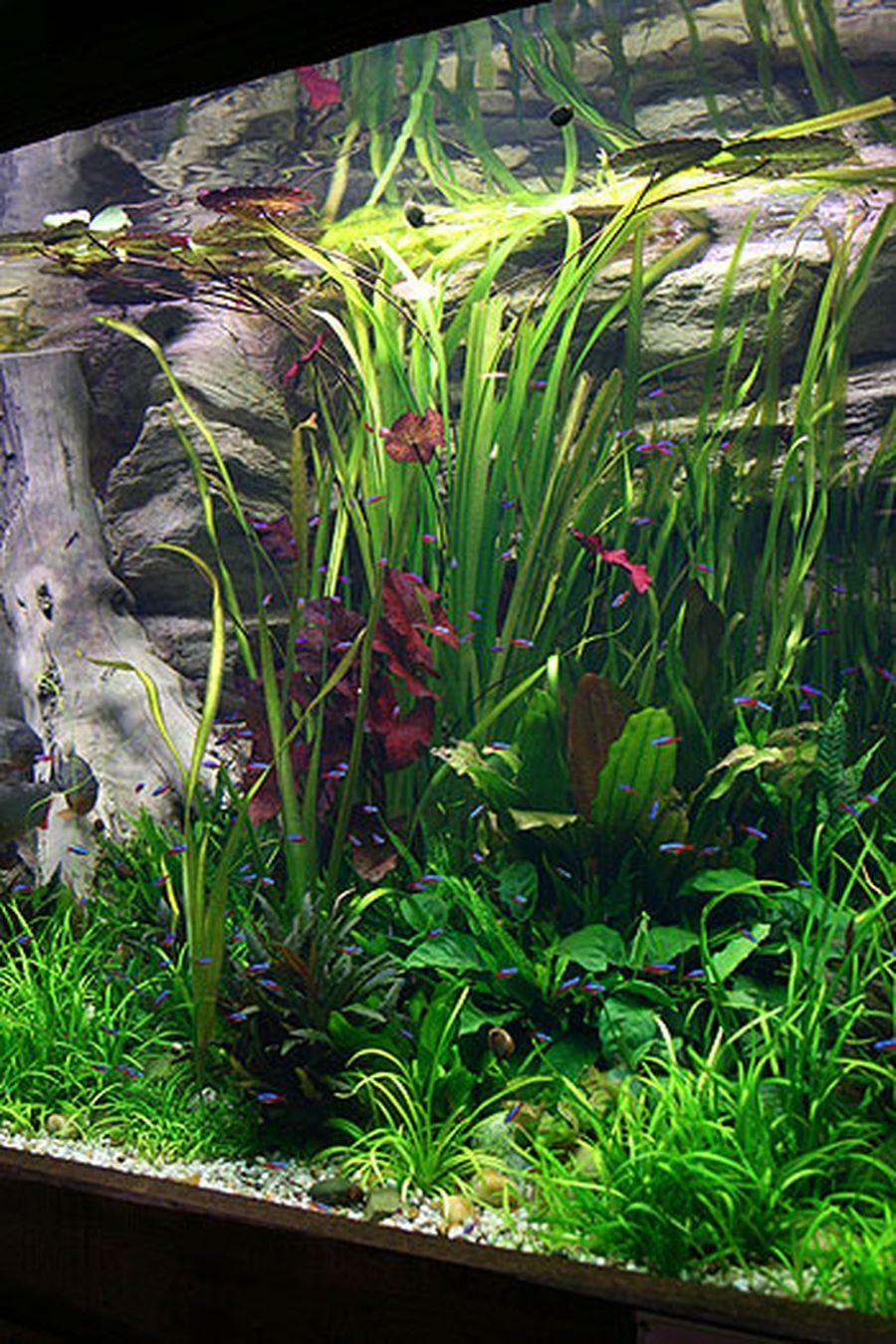 Amazing Aquascape Gallery Ideas That You Never Seen Before Tropicalfishaquariumideas Ideias Para Aquario Peixe De Agua Doce Aquapaisagismo