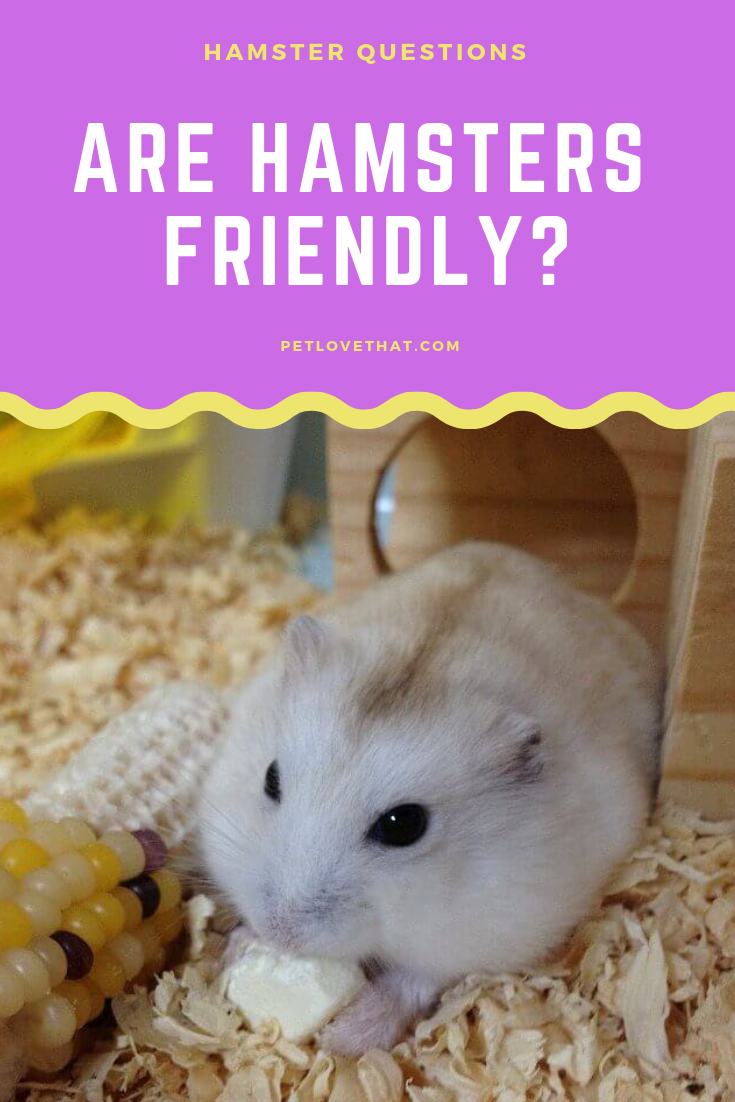 Aside From Being Cute And Low Maintenance They Are Generally Great Beginner Pets For Kids For Thousands Of Peop Hamster Animals For Kids Low Maintenance Pets
