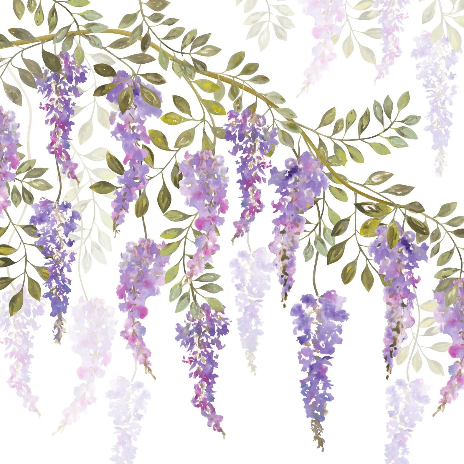 Vector Set Of Outline Wisteria Or Wistaria Flower Bunch And Bud In Black Pink And Pastel Purple Isolated On Whi Flower Line Drawings Flower Drawing Flower Art