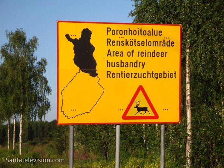 Mais de 200 000 renas na Lapônia na Finlândia – atenção aos sinas de trânsito sobre as renas