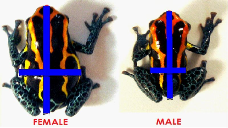 sexual dimorphism behavior Sexual dimorphism describes animals where there is a physical differences between males and females of the same species (other than in the sex organs.