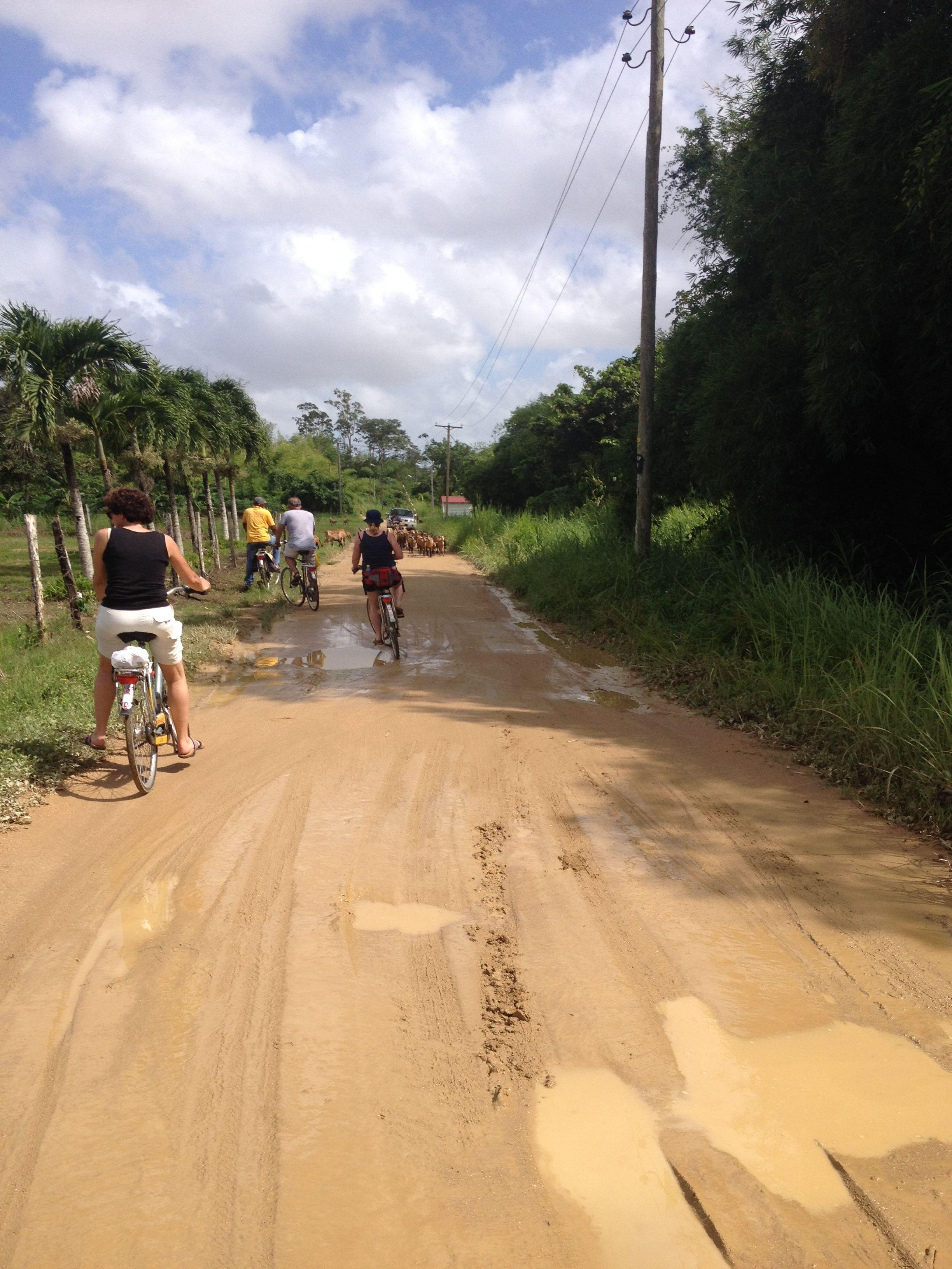 De plantages verken je het beste per fiets. Diverse woningen zijn gekocht en gerenoveerd.