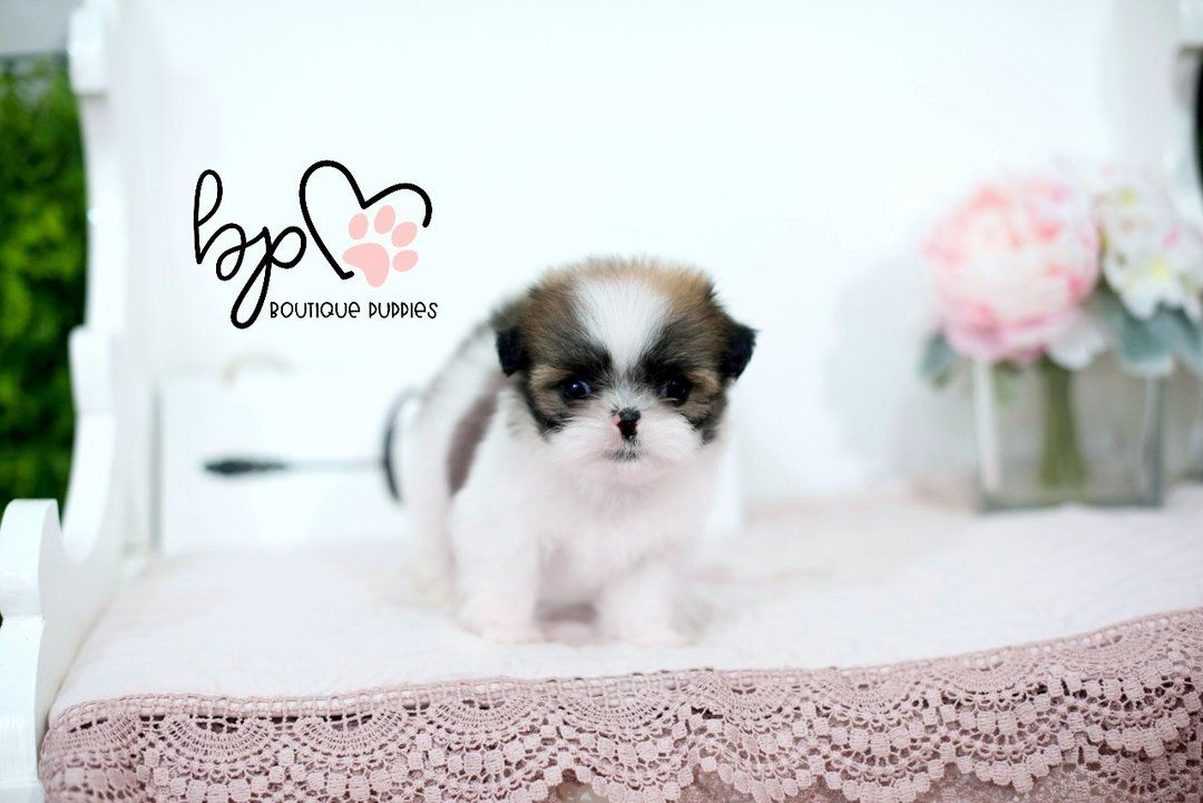 "Lil ""Penelope"""