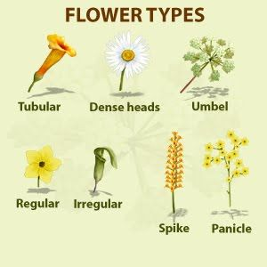 Flower identification back to nature pinterest plant flower identification mightylinksfo Choice Image