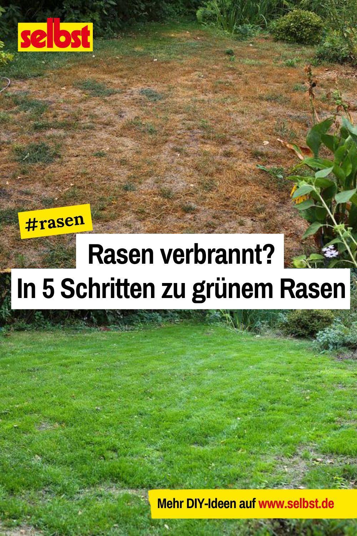Rasen Verbrannt Selbst De Rasen Unkraut Im Rasen Rasen Ausbessern