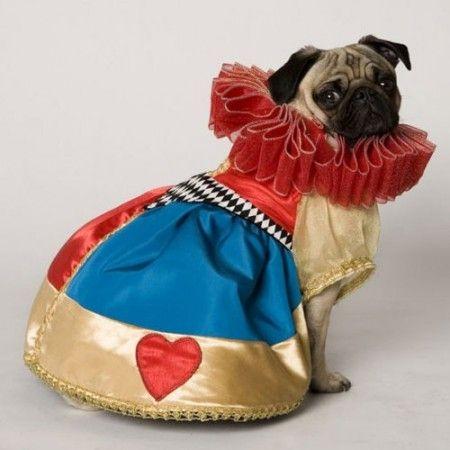 queen pug