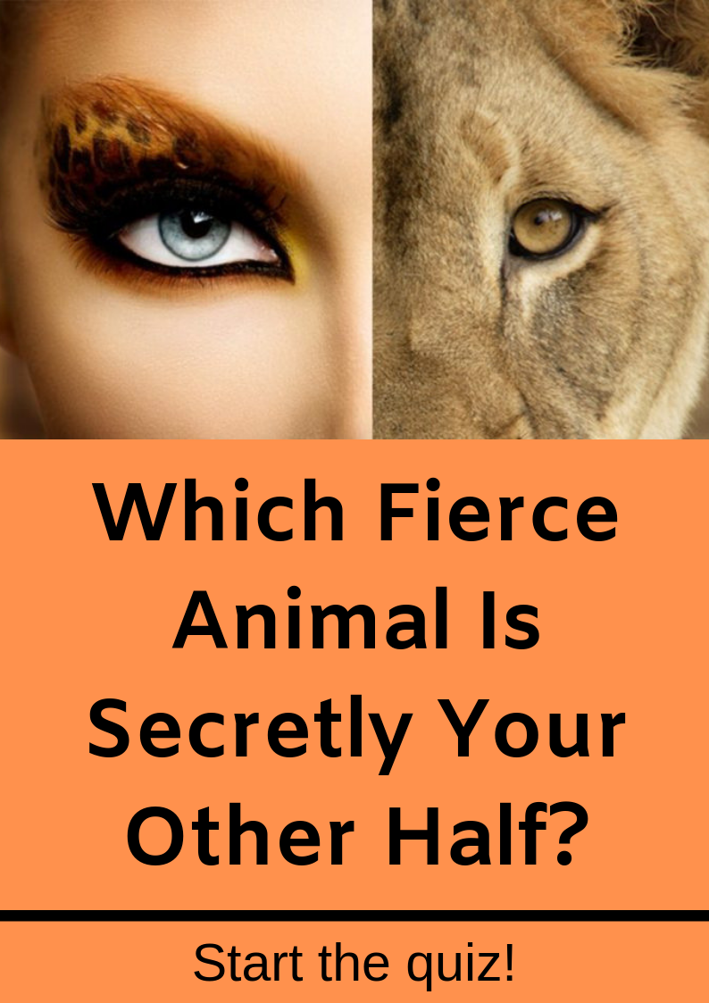Which Fierce Animal Is Secretly Your Other Half With Images