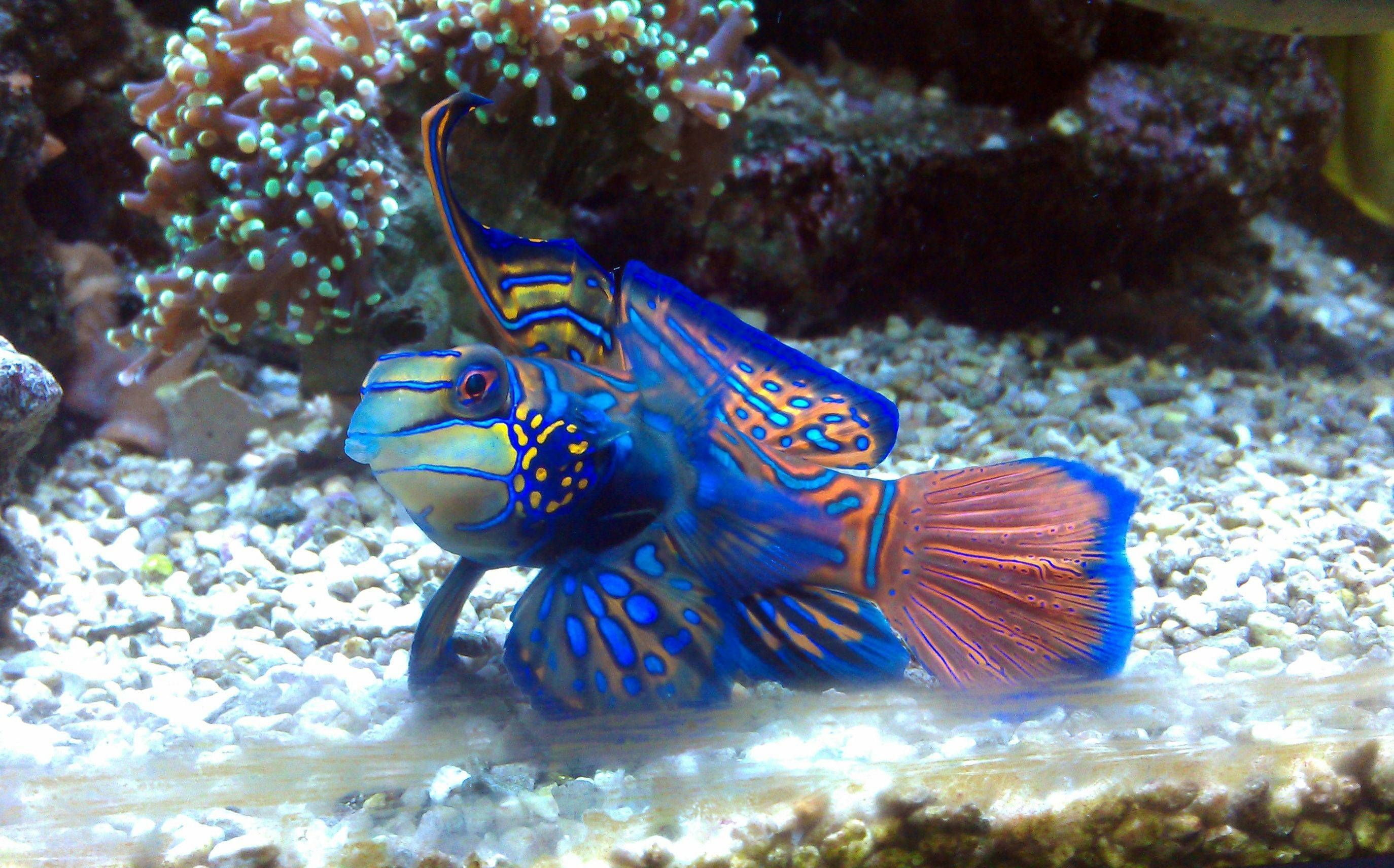 Fish With Human Face This Is Normal Here In Brazil R Pics Saltwater Aquarium Fish Marine Aquarium Fish Saltwater Aquarium